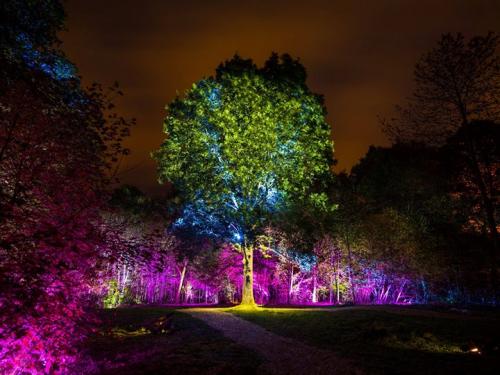 led uplighting in trees